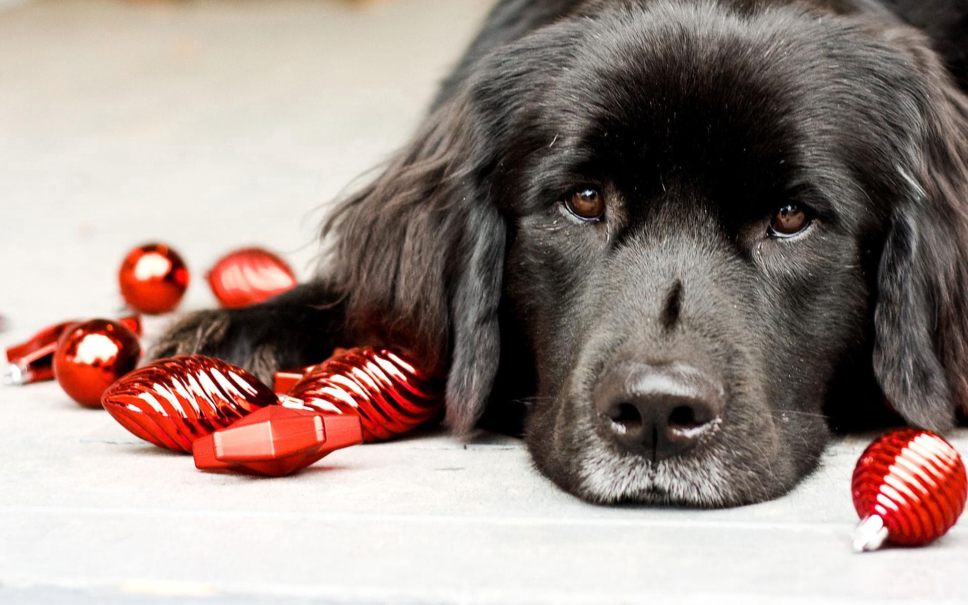 141543 download wallpaper Animals, Puppy, Toy, To Lie Down, Lie, Muzzle screensavers and pictures for free