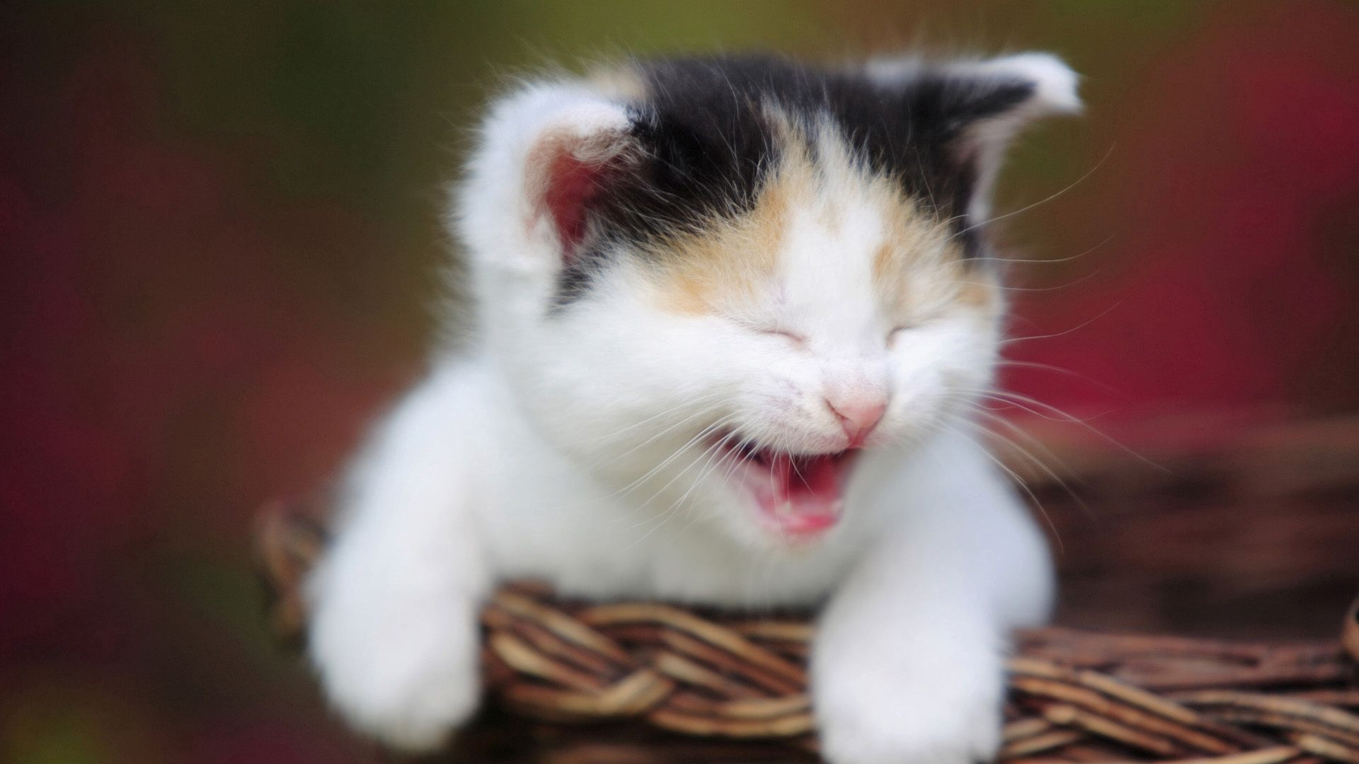 139901 download wallpaper Animals, Kitty, Kitten, Spotted, Spotty, Basket, Scream, Cry screensavers and pictures for free