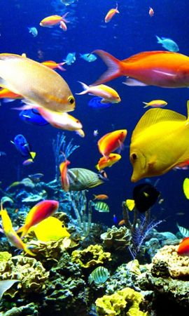 31411 download wallpaper Animals, Aquariums, Fishes screensavers and pictures for free