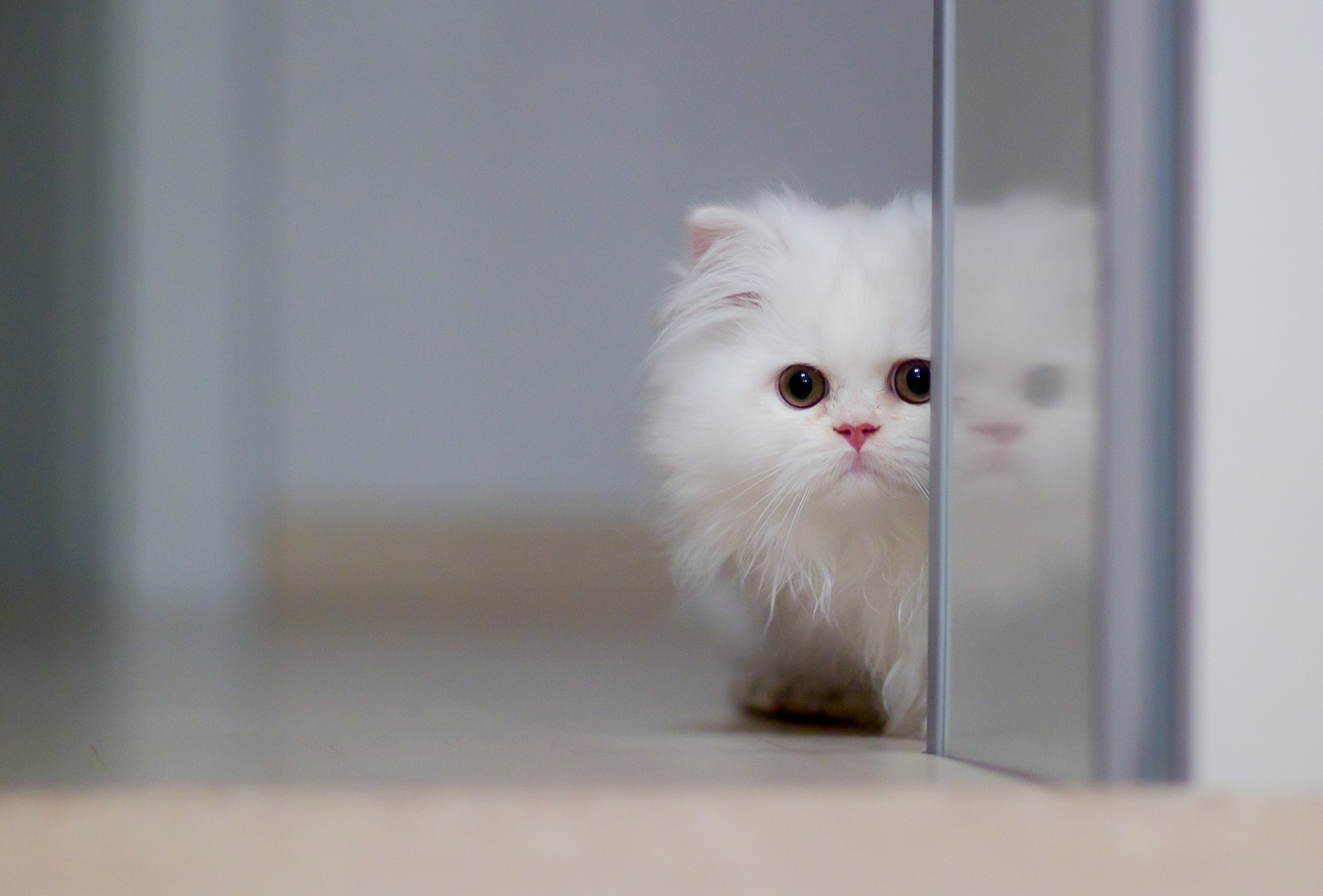 79019 Screensavers and Wallpapers Kitten for phone. Download Animals, Cat, Fluffy, Kitty, Kitten pictures for free