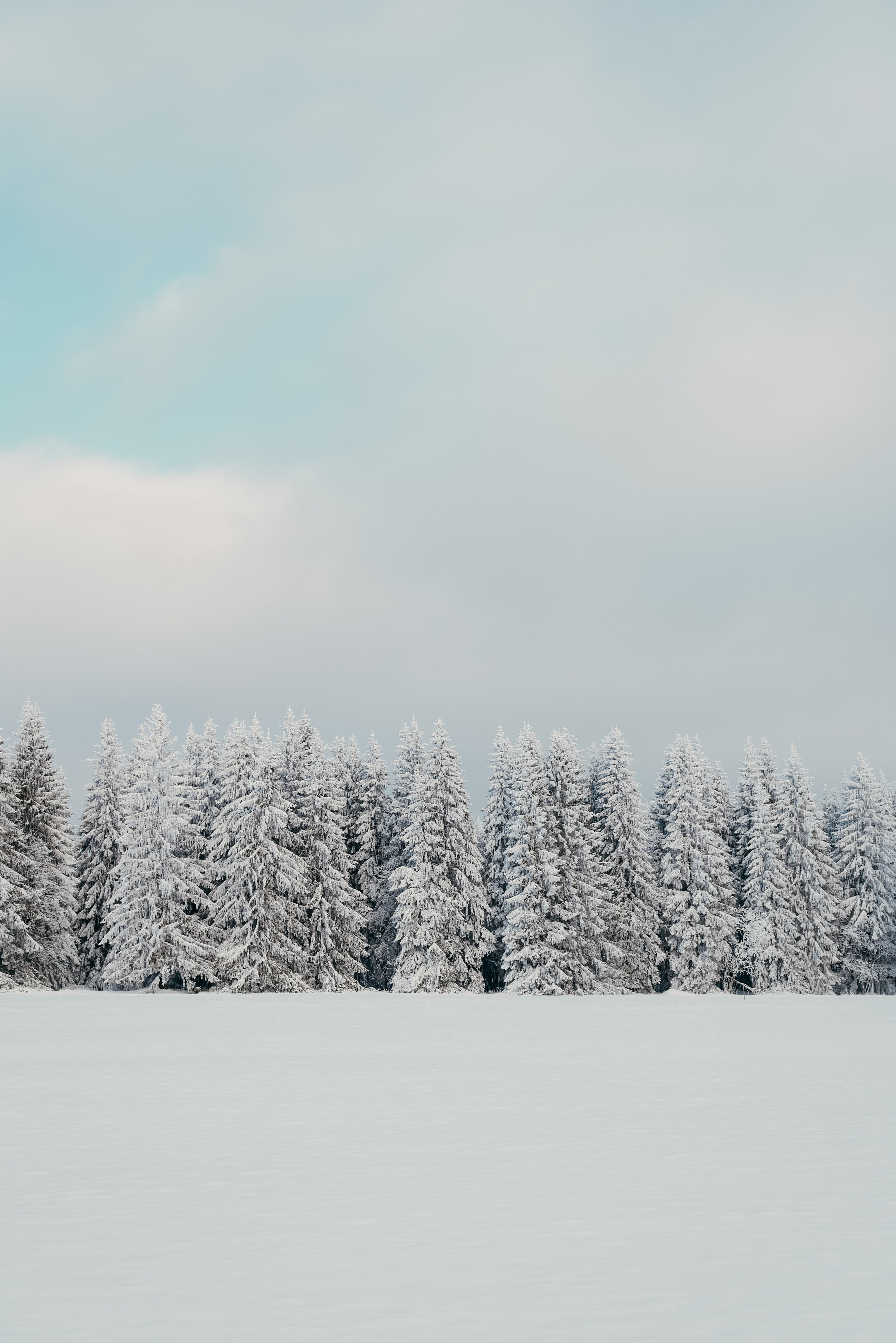 146589 download wallpaper Trees, Snow, Winter, Nature, Fir-Trees screensavers and pictures for free