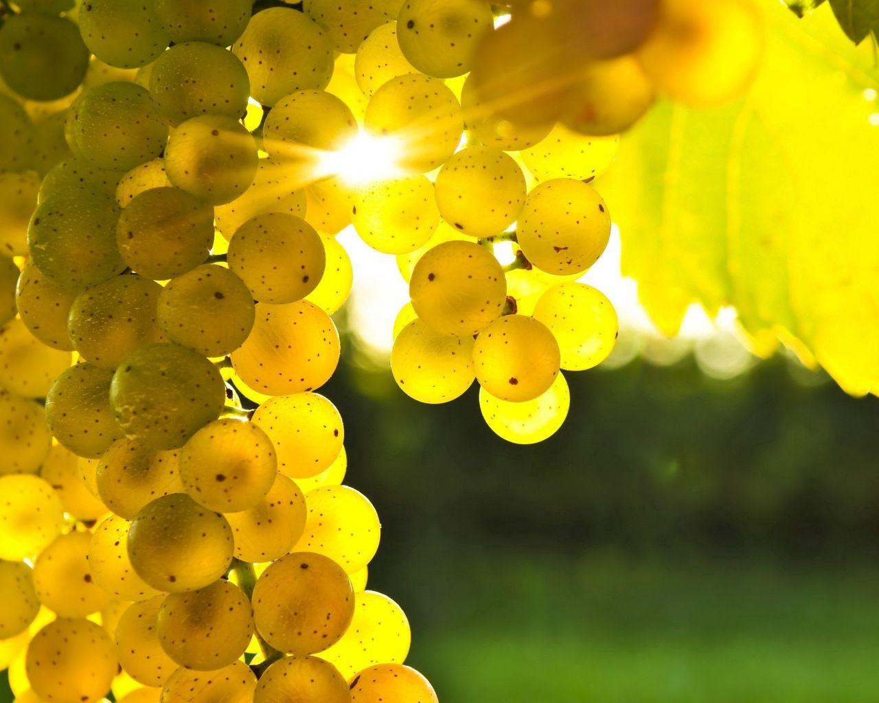 147952 скачать обои Виноград, Еда, Солнце, Свет, Желтый, Лоза - заставки и картинки бесплатно