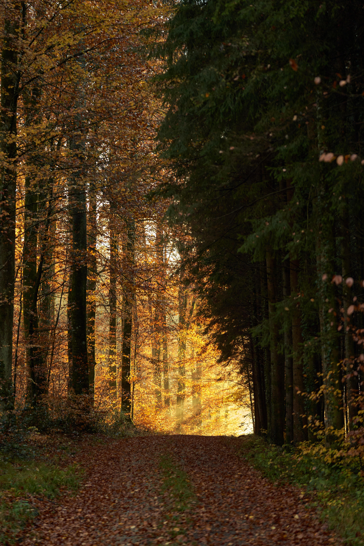 75127壁紙のダウンロード自然, 木, 道, パス, 森林, 森, ビーム, 光線, 輝く, 光-スクリーンセーバーと写真を無料で
