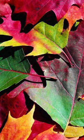 9103 скачать обои Растения, Фон, Осень, Листья - заставки и картинки бесплатно