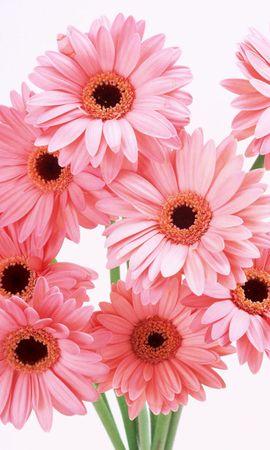 16216 descargar fondo de pantalla Plantas, Flores: protectores de pantalla e imágenes gratis