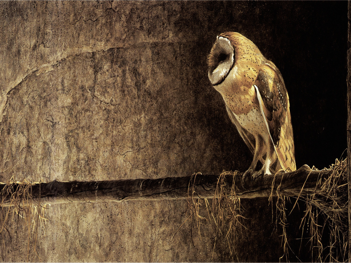 11631 download wallpaper Animals, Birds, Owl screensavers and pictures for free