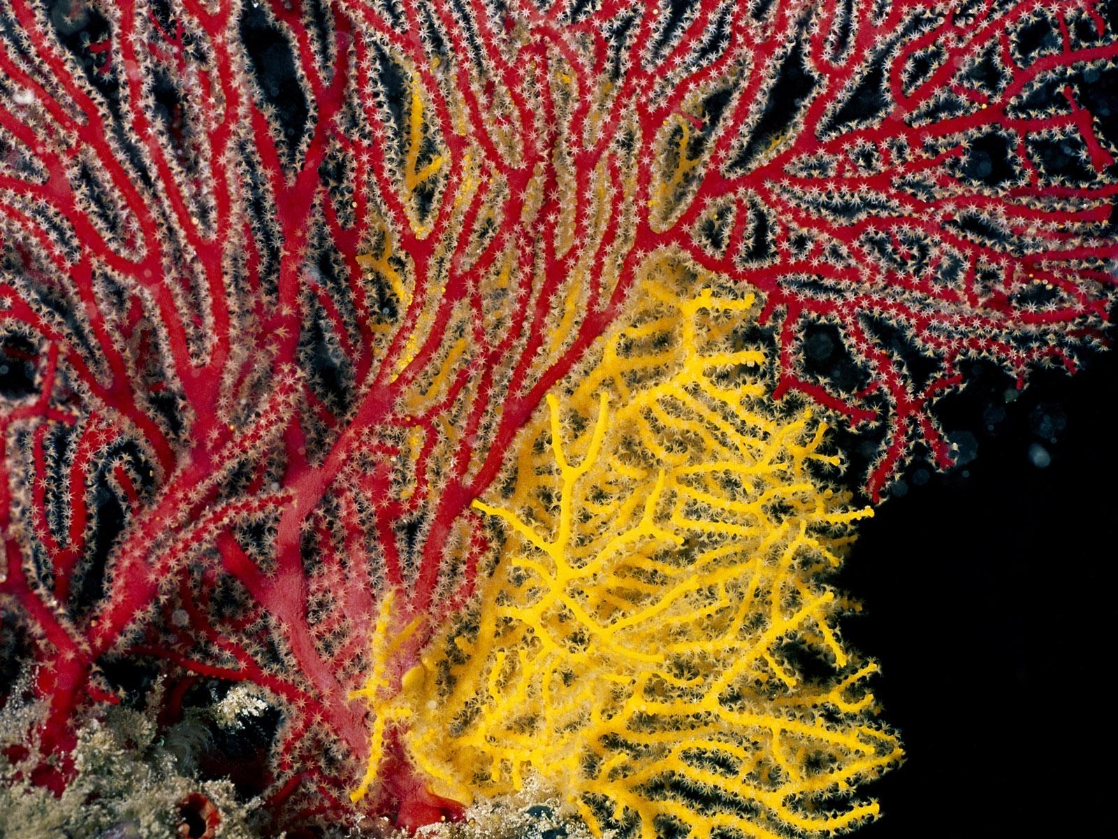7690 скачать обои Фон, Море, Кораллы - заставки и картинки бесплатно