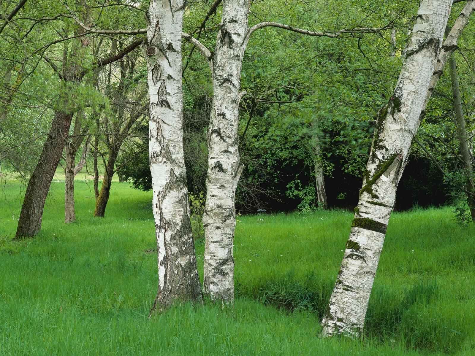 3560 скачать обои Пейзаж, Деревья - заставки и картинки бесплатно