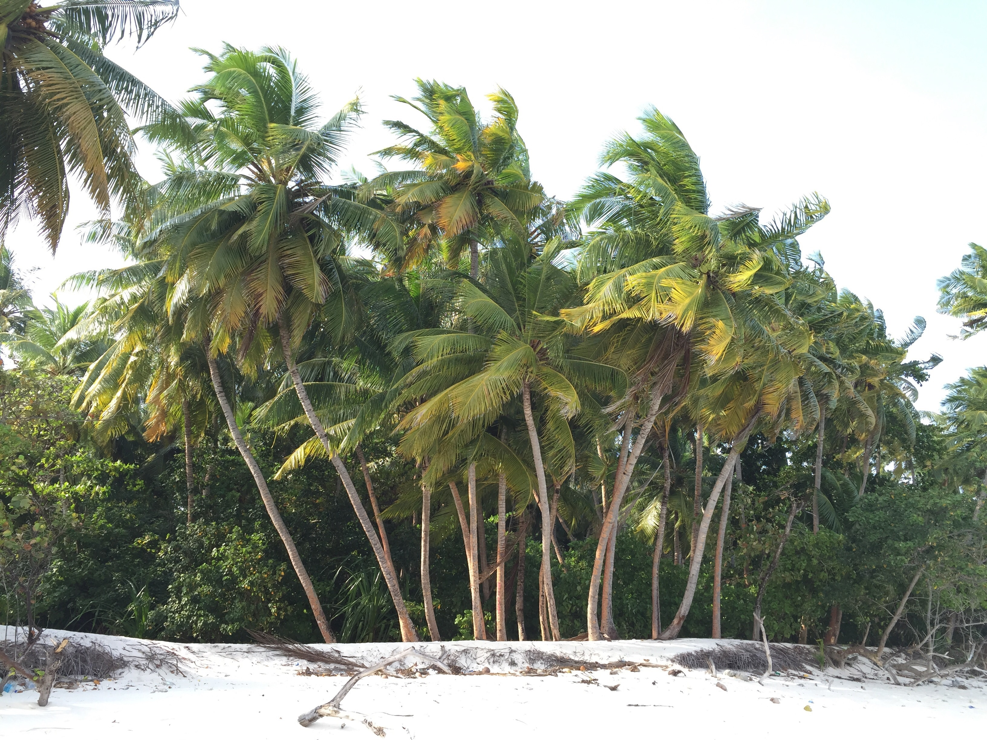 134288 Заставки и Обои Песок на телефон. Скачать Песок, Природа, Деревья, Пляж, Пальмы картинки бесплатно