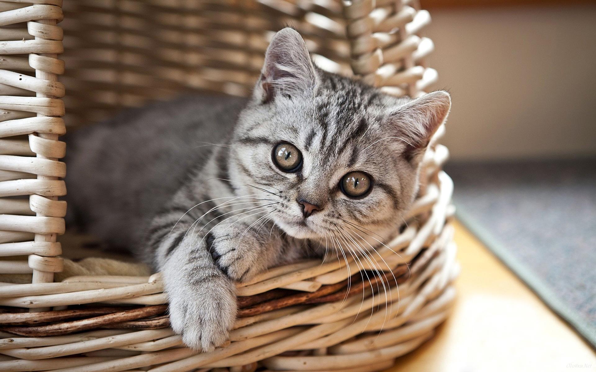 44558 Заставки и Обои Кошки (Коты, Котики) на телефон. Скачать Животные, Кошки (Коты, Котики) картинки бесплатно