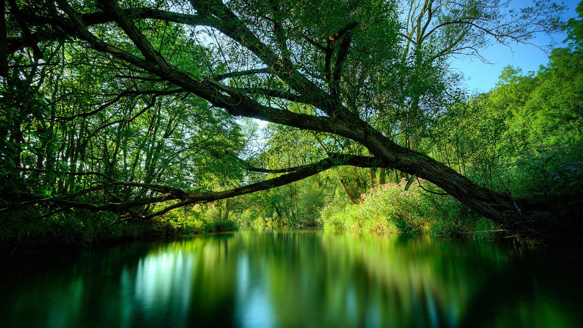 13985 descargar fondo de pantalla Paisaje, Agua, Árboles: protectores de pantalla e imágenes gratis