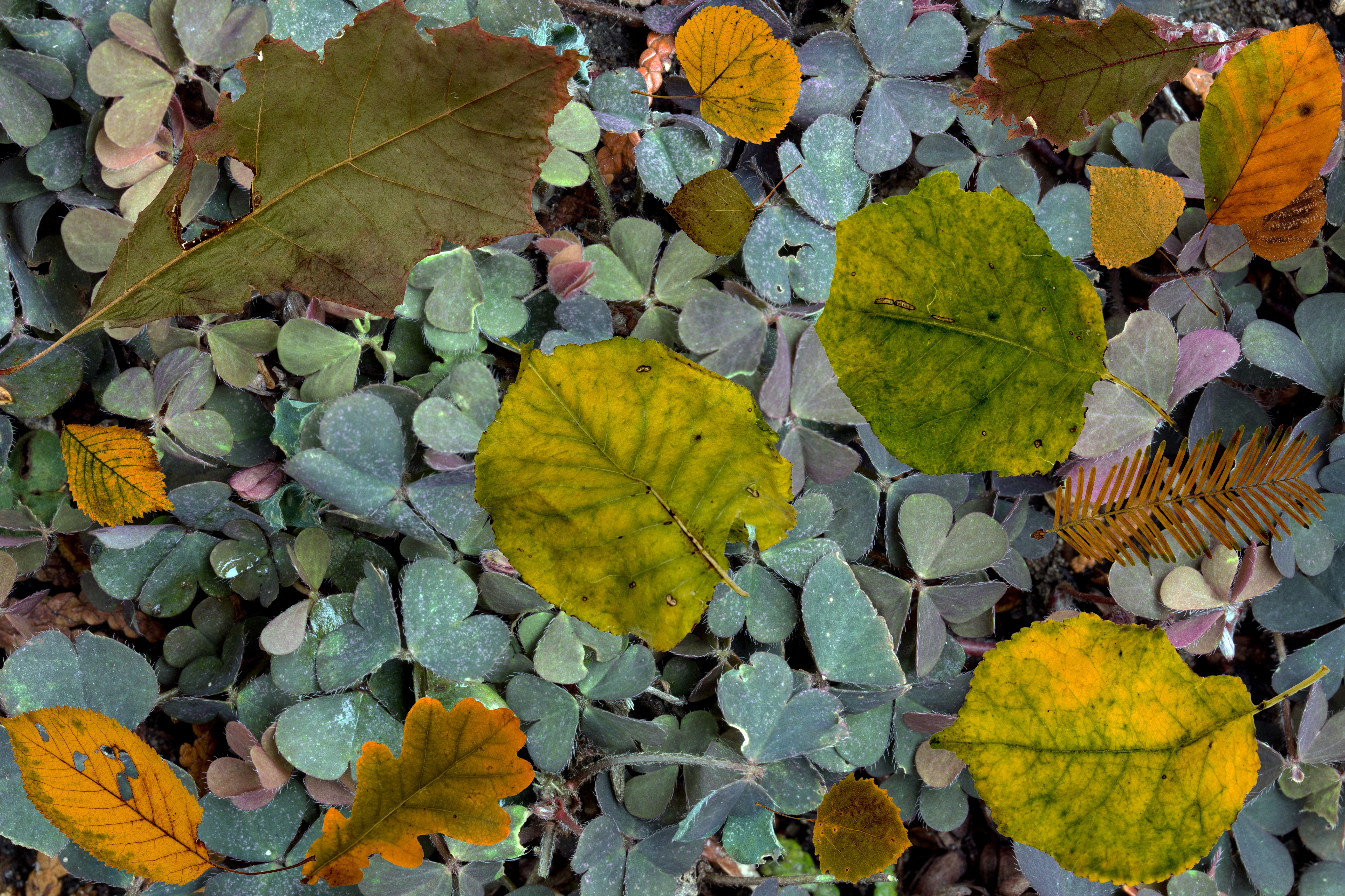 70748 download wallpaper Nature, Autumn, Fern, Foliage, Fallen screensavers and pictures for free