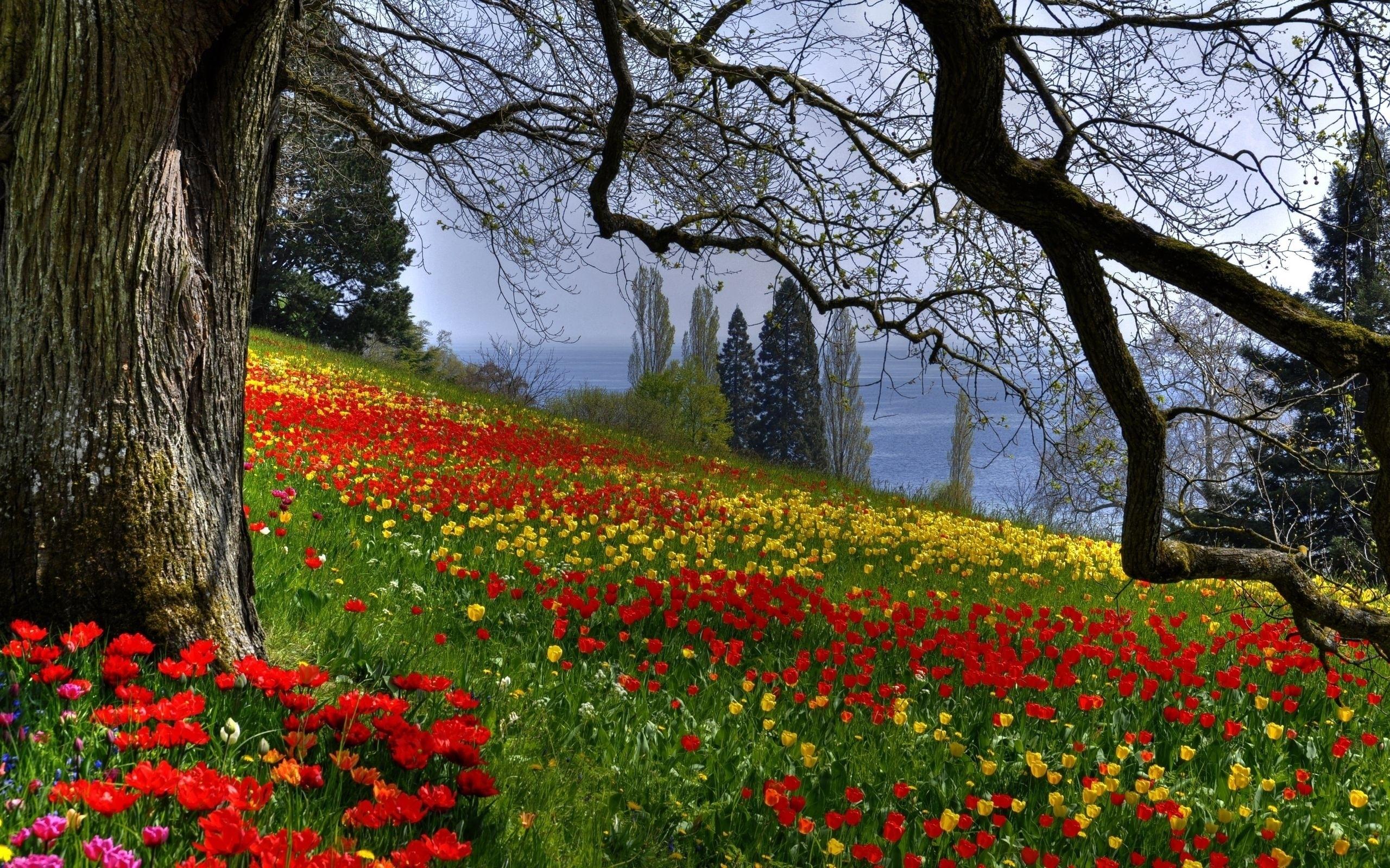 25865 скачать обои Пейзаж, Цветы, Деревья - заставки и картинки бесплатно