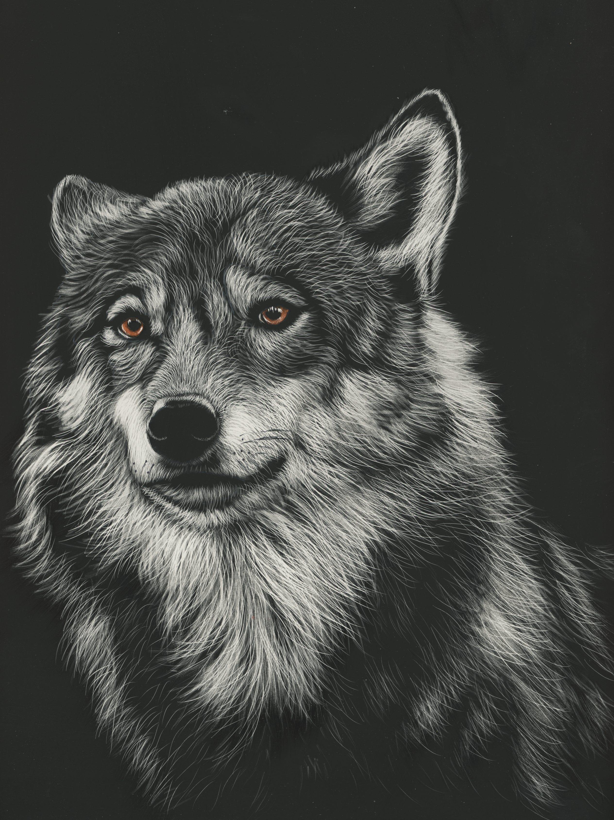 61646 Hintergrundbild herunterladen Zeichnung, Kunst, Bild, Raubtier, Predator, Wolf, Kopf - Bildschirmschoner und Bilder kostenlos