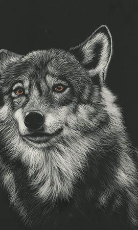 61646 baixar papel de parede Lobo, Foto, Desenho, Arte, Predator, Predador, Cabeça - protetores de tela e imagens gratuitamente