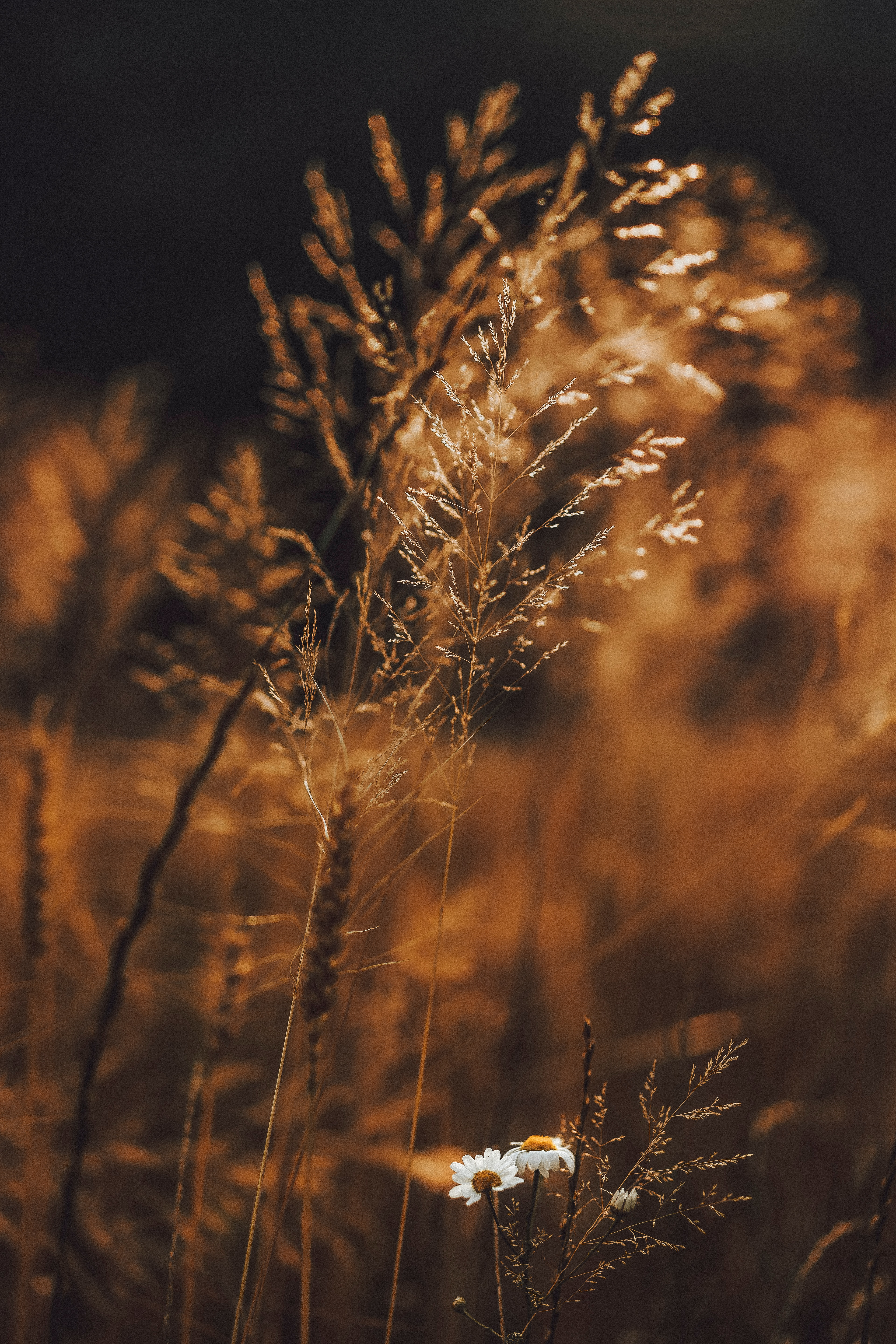 66866 download wallpaper Plants, Flowers, Grass, Cones, Macro, Field, Spikelets screensavers and pictures for free