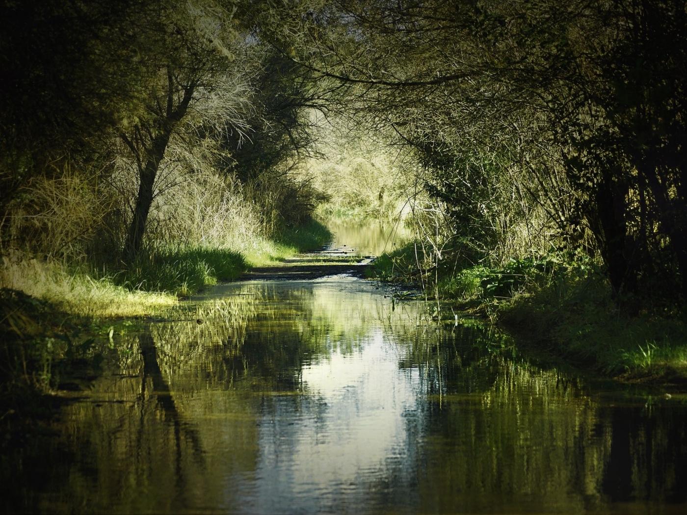 28180 скачать обои Пейзаж, Река, Деревья - заставки и картинки бесплатно