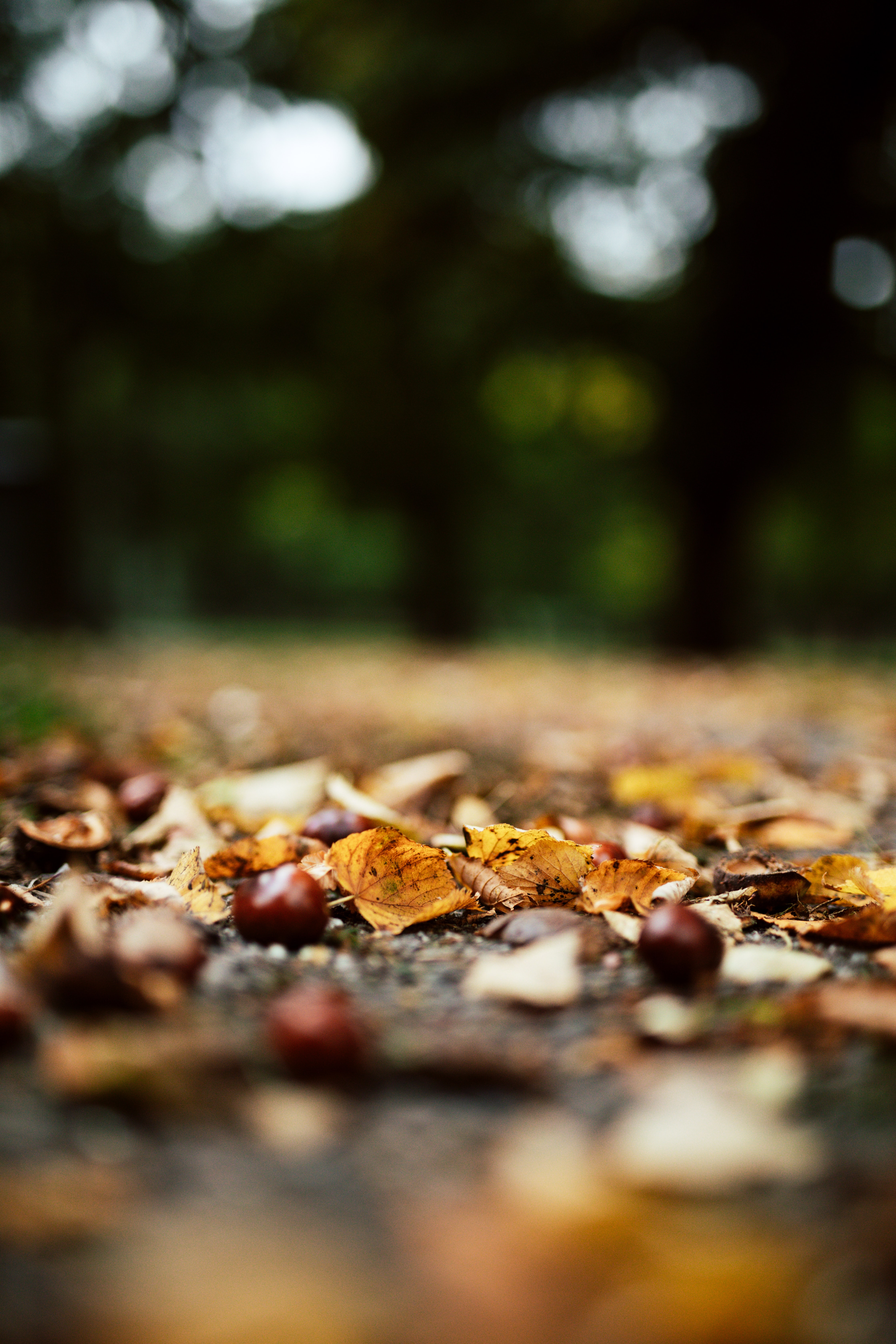 143293 download wallpaper Nature, Leaves, Autumn, Forest, Chestnuts screensavers and pictures for free