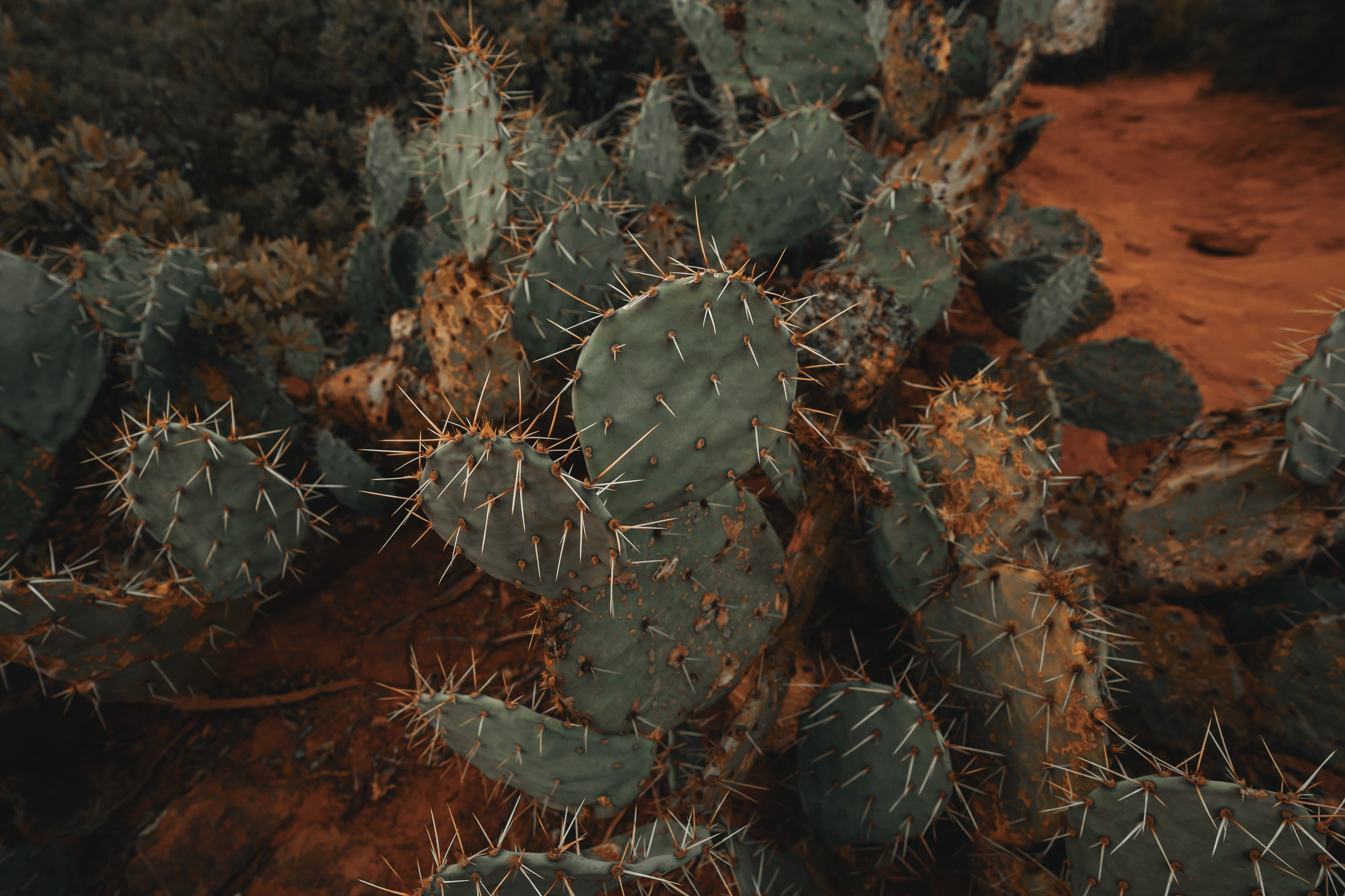 60756 download wallpaper Flowers, Plant, Barbed, Spiny, Cactus, Succulent screensavers and pictures for free