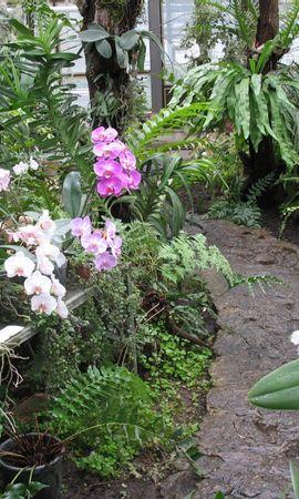 3458 descargar fondo de pantalla Plantas, Flores: protectores de pantalla e imágenes gratis