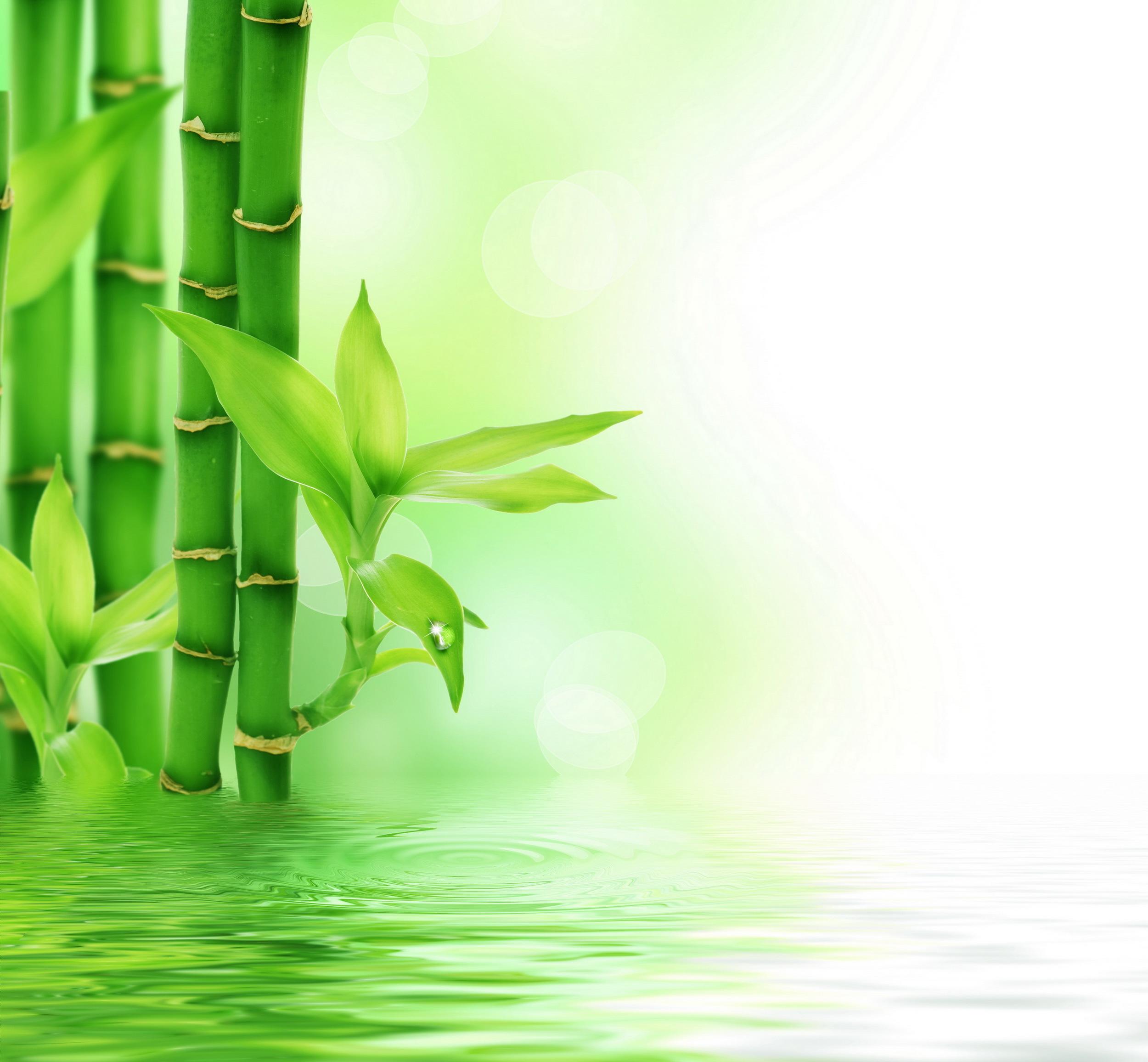 Descarga gratuita de fondo de pantalla para móvil de Plantas, Agua, Fondo.