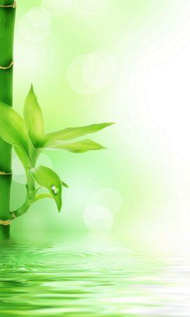13884 скачать обои Растения, Вода, Фон - заставки и картинки бесплатно