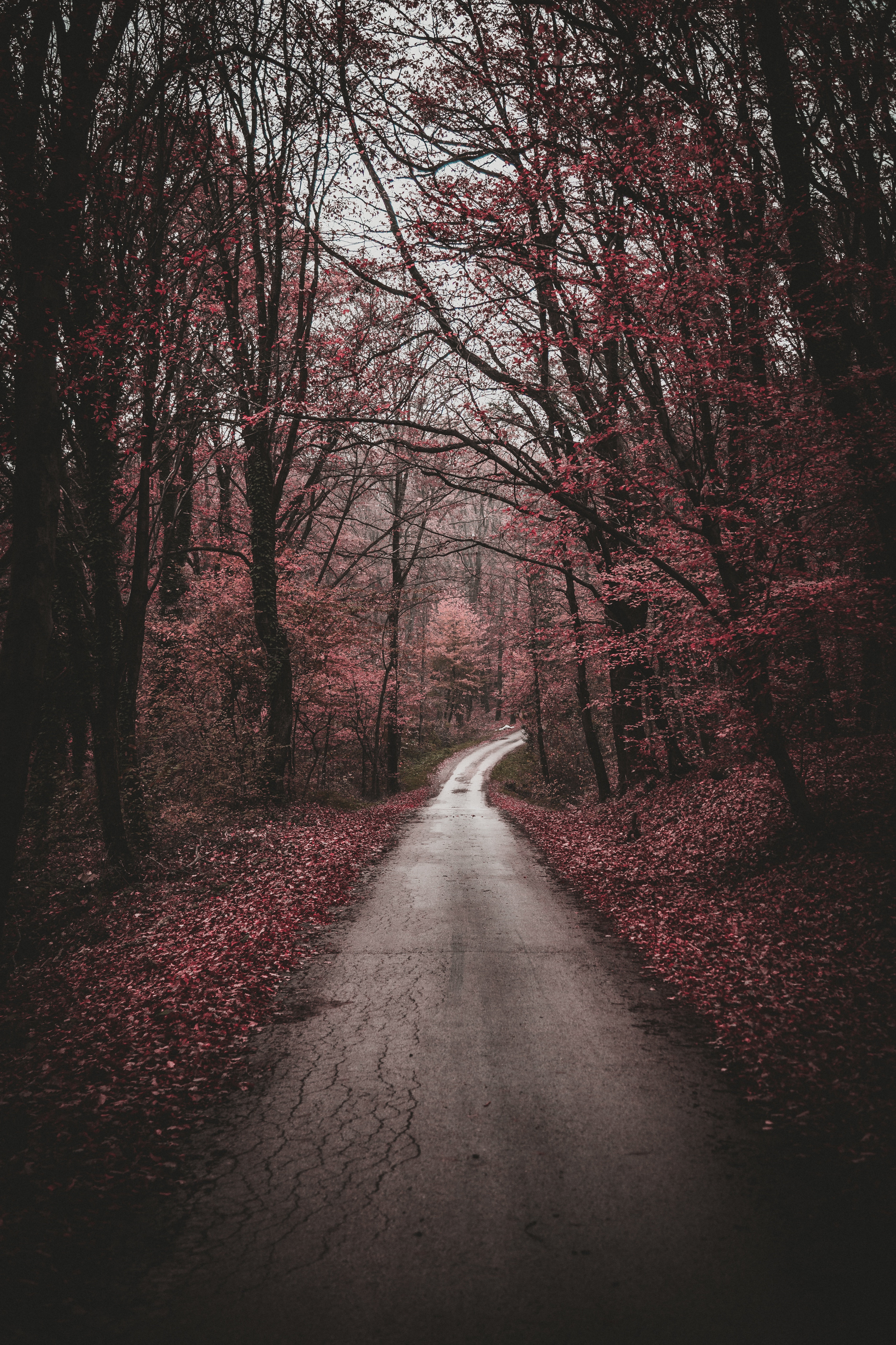 87319 free wallpaper 720x1280 for phone, download images Nature, Trees, Autumn, Forest, Path, Stroll 720x1280 for mobile