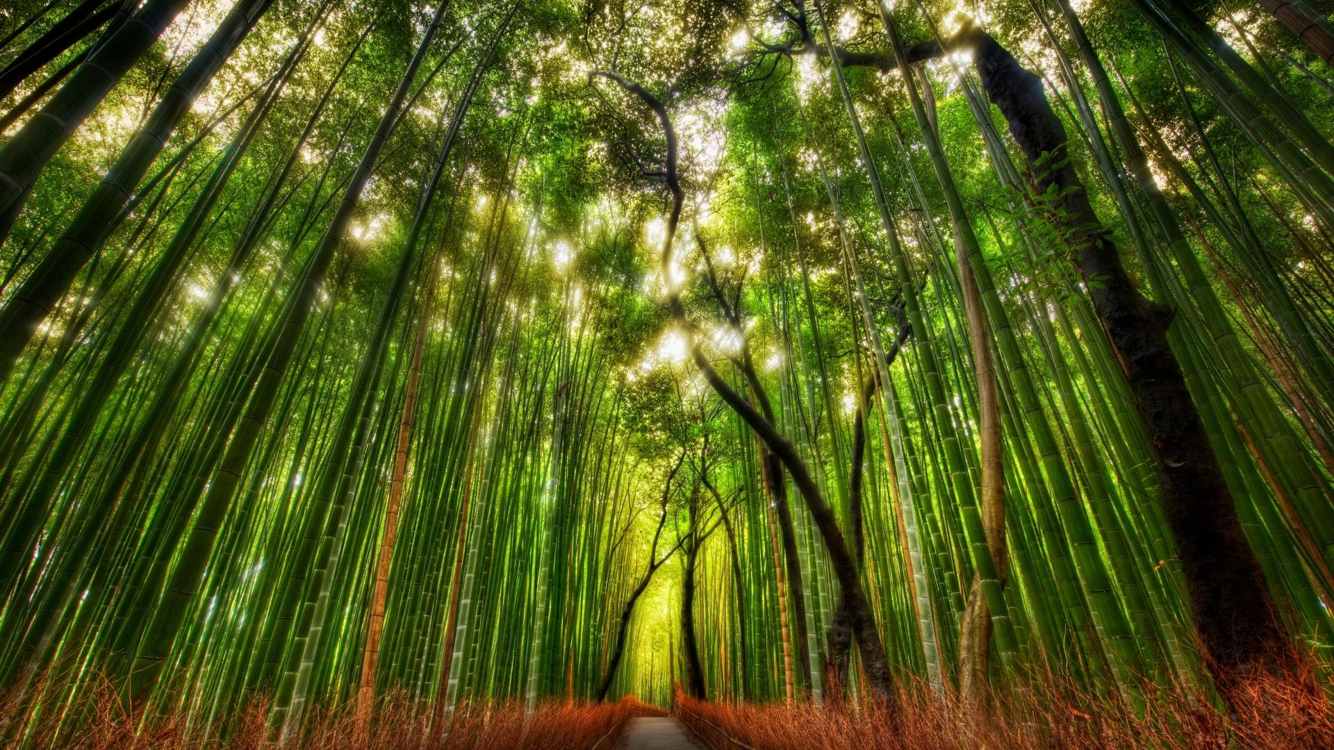 23656 скачать обои Пейзаж, Деревья, Дороги - заставки и картинки бесплатно