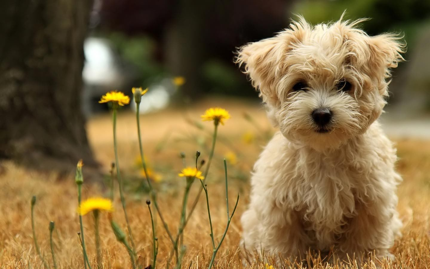 16274 download wallpaper Animals, Dogs screensavers and pictures for free