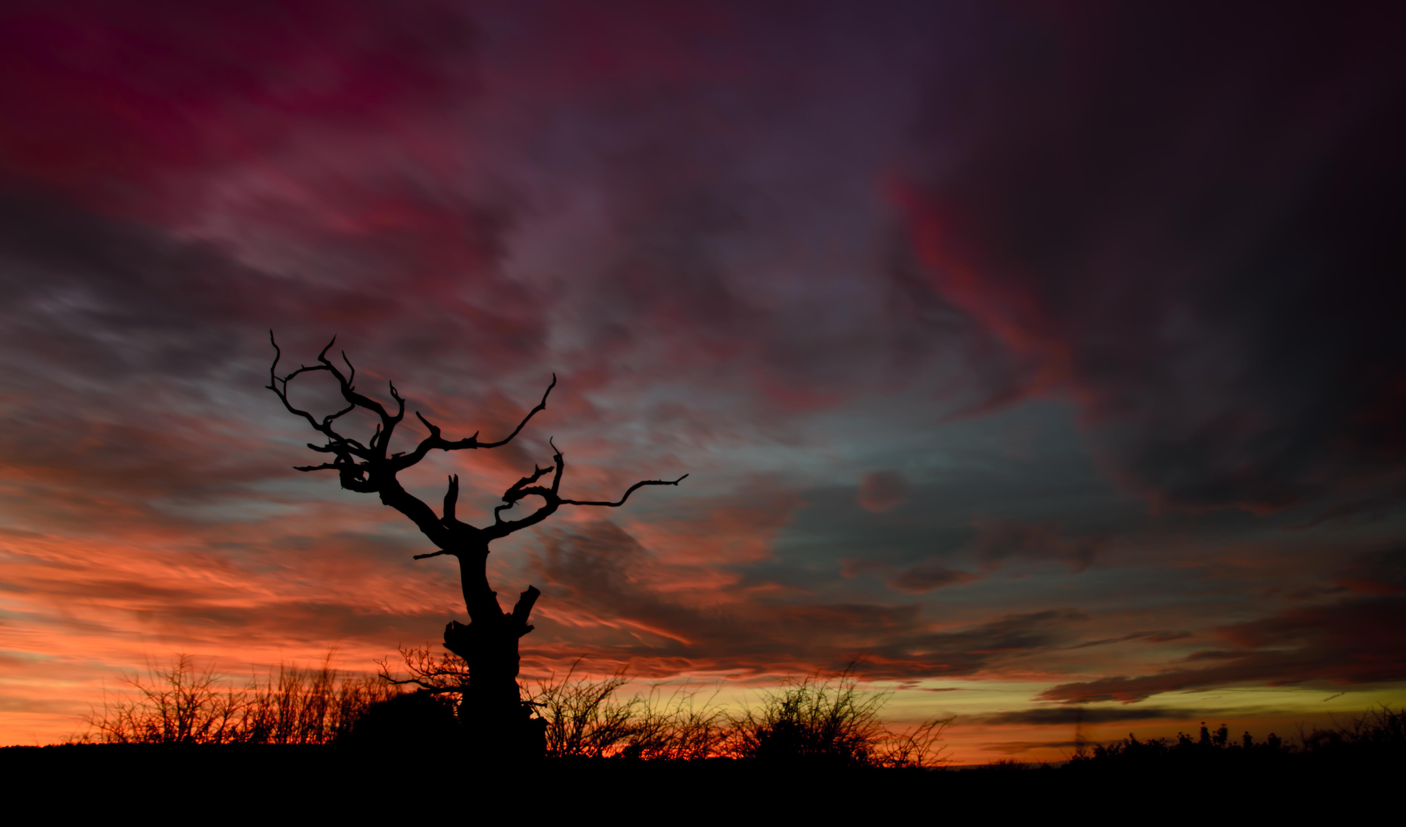74459 Hintergrundbild 800x480 kostenlos auf deinem Handy, lade Bilder Natur, Sunset, Sky, Übernachtung, Silhouette, Holz, Baum 800x480 auf dein Handy herunter