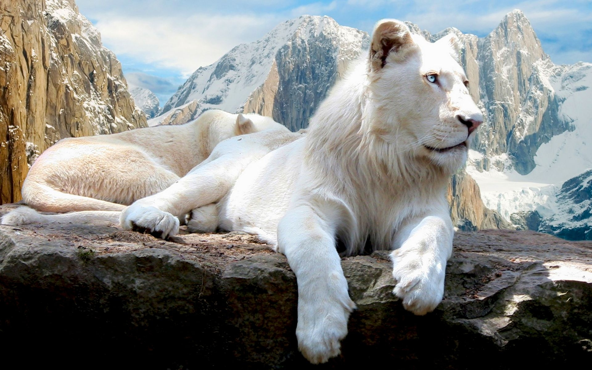 41506 download wallpaper Animals, Landscape, Mountains, Lions screensavers and pictures for free