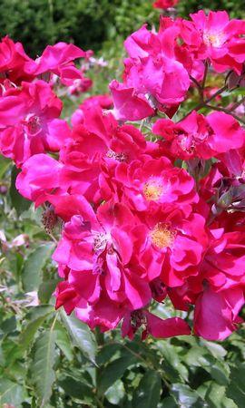 2555 descargar fondo de pantalla Plantas, Flores: protectores de pantalla e imágenes gratis