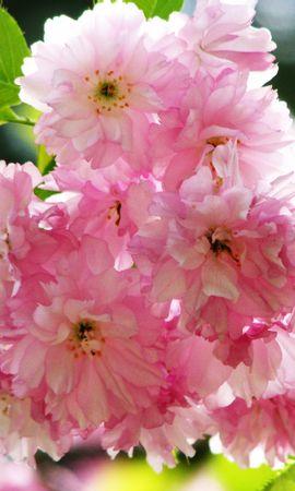 5297 скачать обои Растения, Цветы - заставки и картинки бесплатно