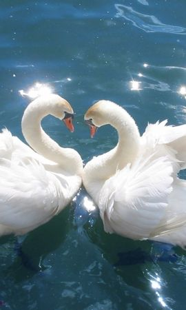 8246 download wallpaper Animals, Birds, Water, Swans screensavers and pictures for free