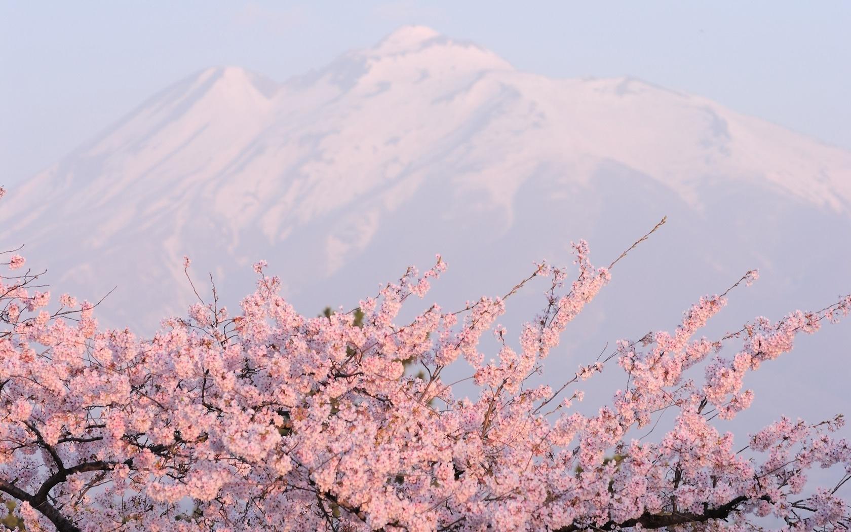 36710 télécharger le fond d'écran Paysage, Montagnes, Sakura - économiseurs d'écran et images gratuitement