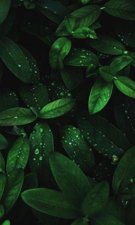 118177 Protetores de tela e papéis de parede Escuro em seu telefone. Baixe Macro, Folhas, Drops, Orvalho, Plantar, Planta, Humidade, Escuro fotos gratuitamente