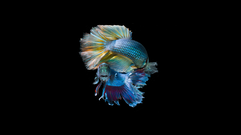 98645 Заставки и Обои Рыбы на телефон. Скачать Рыбы, Рыбки, Животные, Блеск, Чешуя, Хвост картинки бесплатно