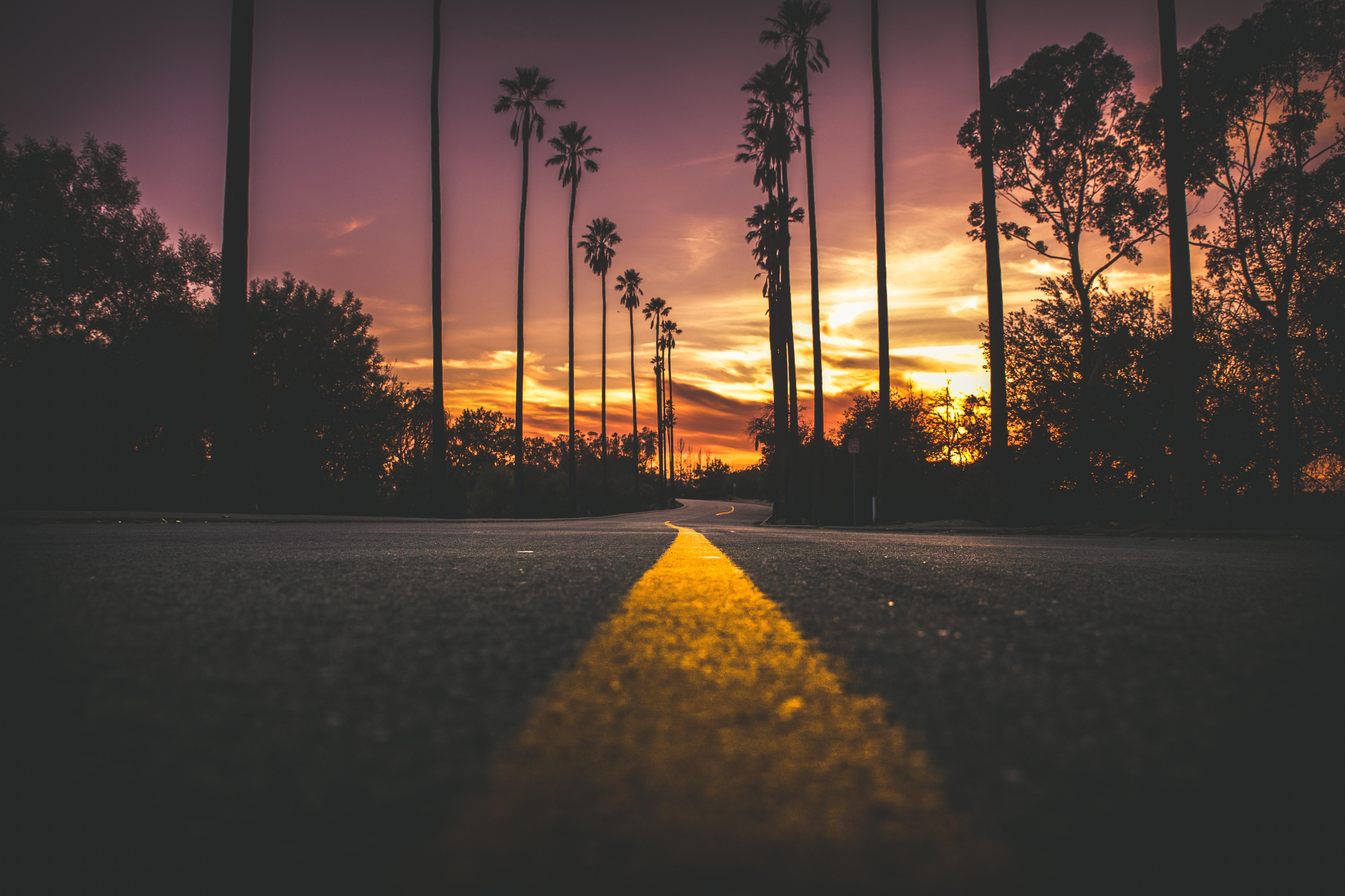 85867 Hintergrundbild 720x1280 kostenlos auf deinem Handy, lade Bilder Natur, Bäume, Sky, Palms, Straße, Markup 720x1280 auf dein Handy herunter
