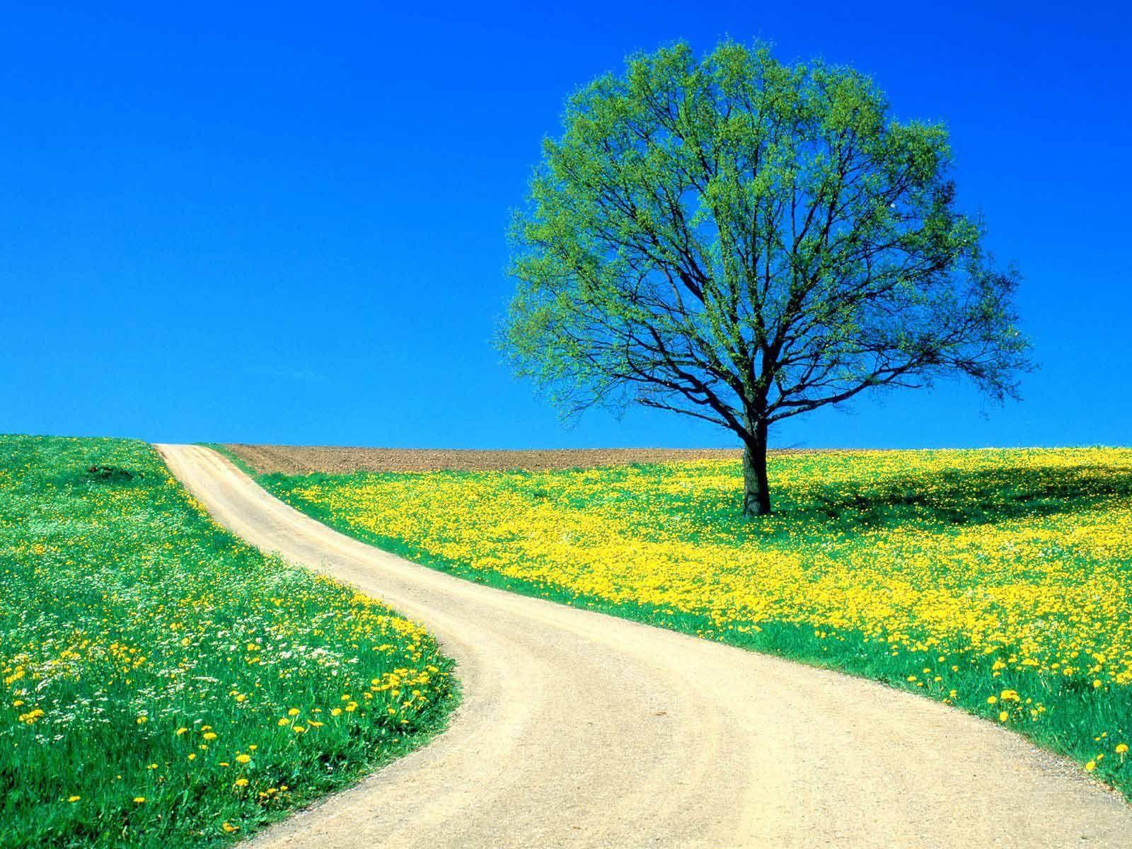 Скачать картинку Природа, Цветы, Одуванчики, Дорога, Дерево, Поле в телефон бесплатно.