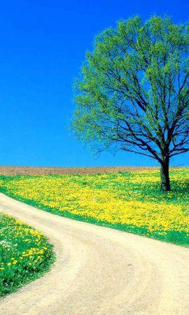 84645 скачать обои Природа, Дерево, Поле, Одуванчики, Дорога, Цветы - заставки и картинки бесплатно