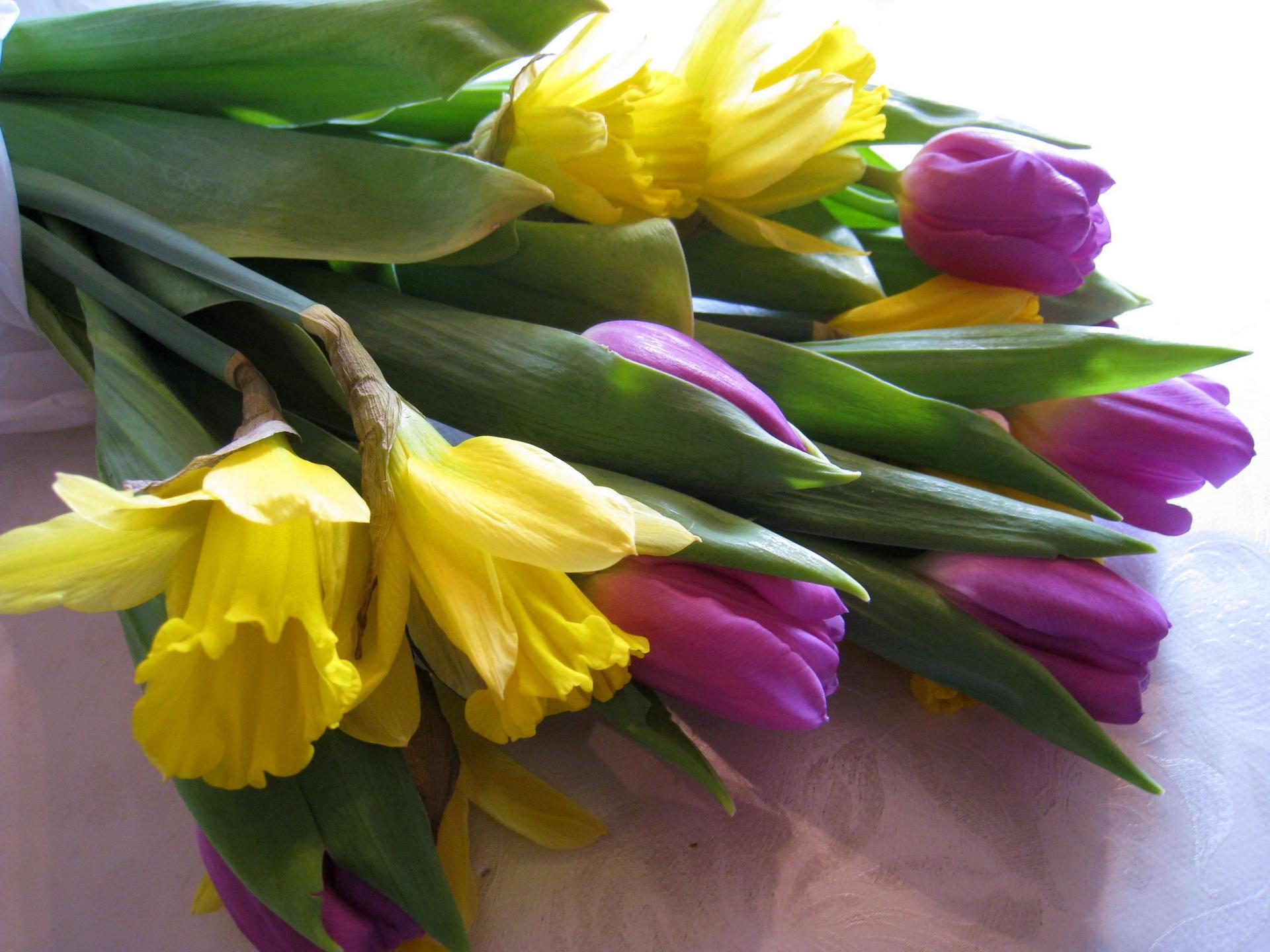 115852 Заставки и Обои Нарциссы на телефон. Скачать Цветы, Тюльпаны, Нарциссы, Букет, Скатерть картинки бесплатно