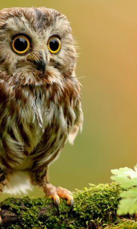 36524 скачать Желтые обои на телефон бесплатно, Животные, Птицы, Совы Желтые картинки и заставки на мобильный