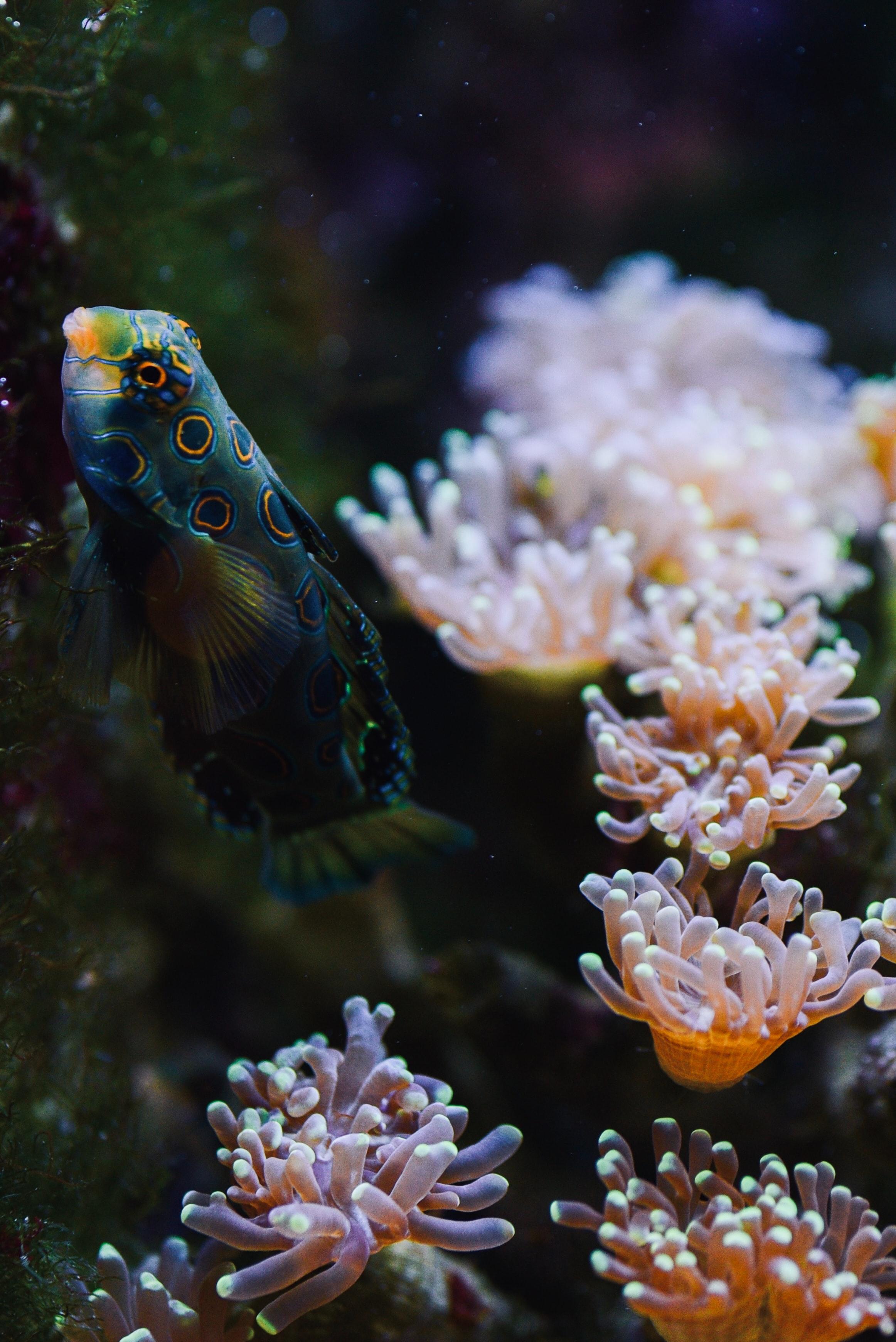 84413 Screensavers and Wallpapers Aquarium for phone. Download Animals, Water, Coral, Aquarium, Fish pictures for free