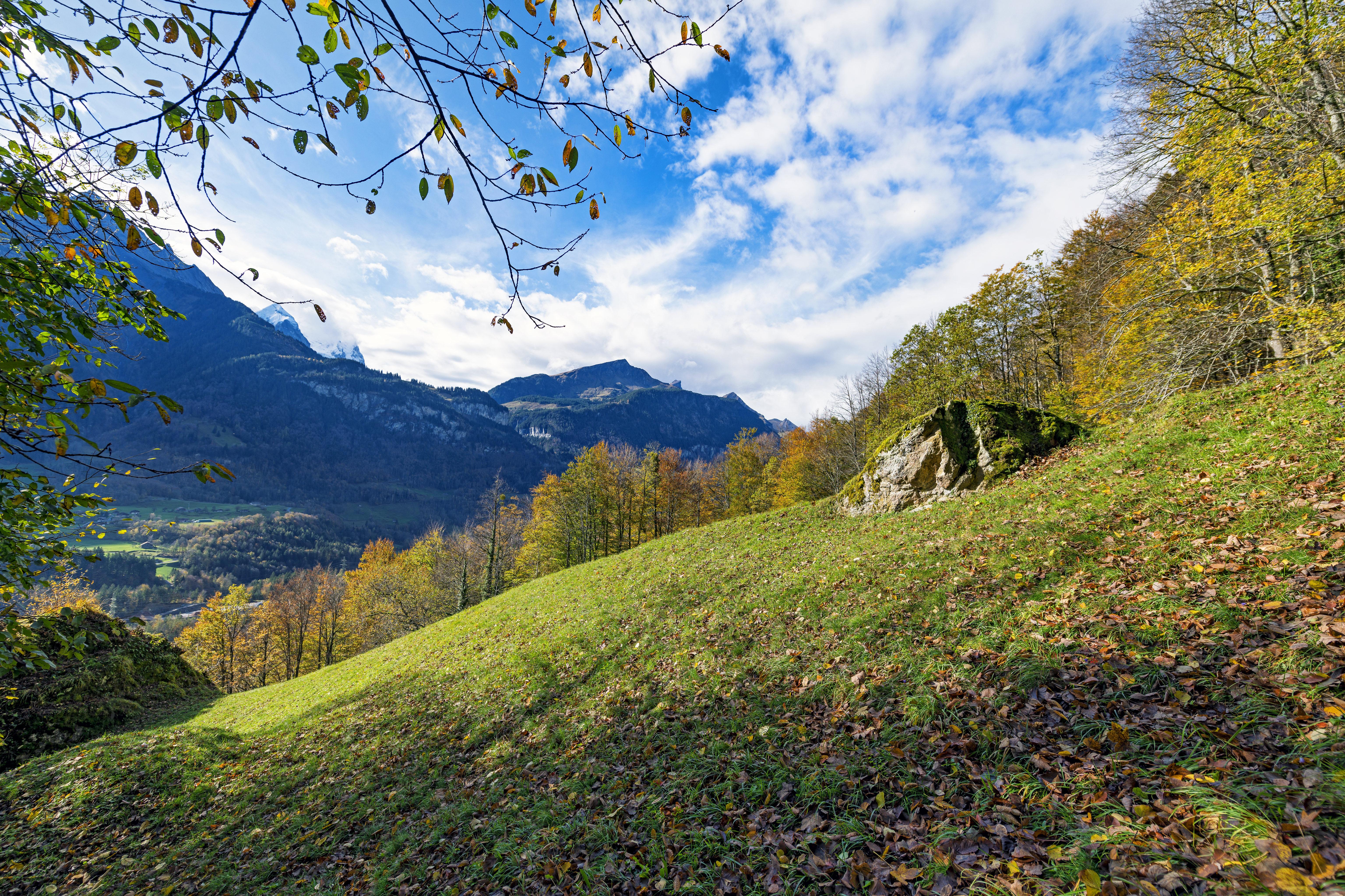 52300 скачать обои Природа, Склон, Ветки, Лес, Горы, Пейзаж - заставки и картинки бесплатно