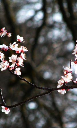 4340 скачать обои Растения, Цветы - заставки и картинки бесплатно