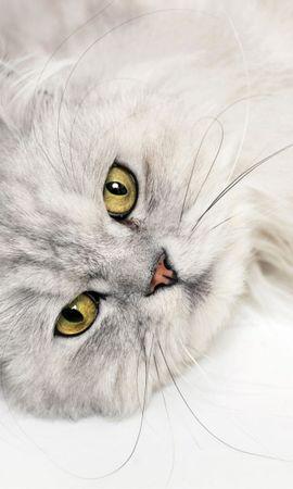25274 скачать обои Животные, Кошки (Коты, Котики) - заставки и картинки бесплатно