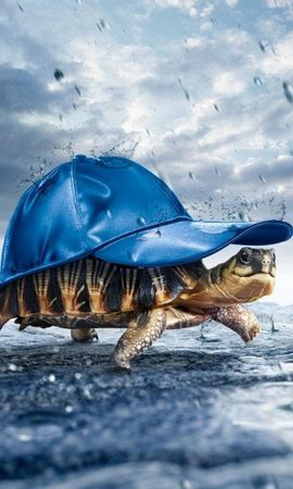 2565 download wallpaper Funny, Animals, Turtles, Art screensavers and pictures for free
