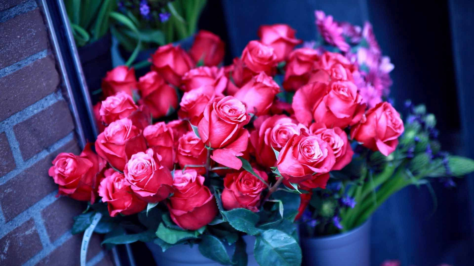 128749 download wallpaper Flowers, Lot, Pot, Wall, Roses screensavers and pictures for free