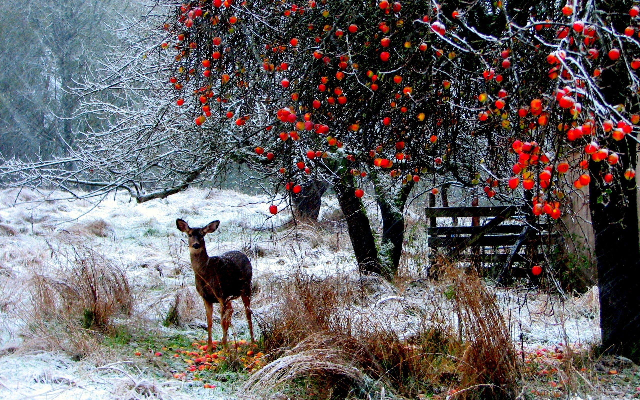 126949 Hintergrundbild herunterladen Schnee, Tiere, Winterreifen, Bäume, Wald, Bummel, Spaziergang, Hirsch - Bildschirmschoner und Bilder kostenlos