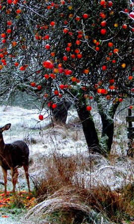126949 download wallpaper Animals, Deer, Winter, Snow, Stroll, Forest, Trees screensavers and pictures for free